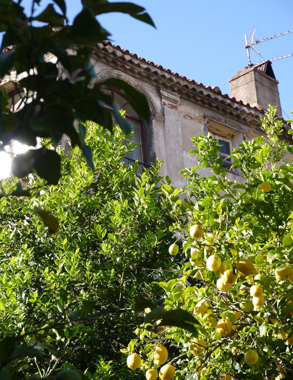 Maison Hotes Calvi Ile Rousse Corse Du Nord